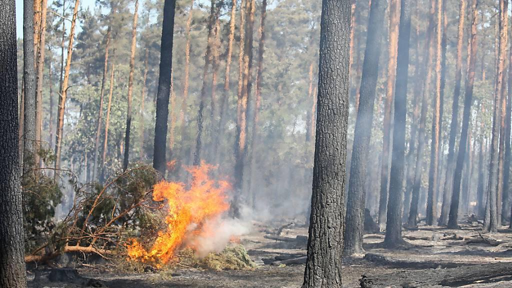 Schon im Frühling gab es im Aargau fünf Waldbrände – Höhenfeuer in Seengen abgesagt