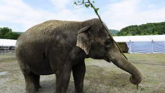 Ein Zirkuselefant hat in Frankreich einen Mann getötet (Symbolbild)