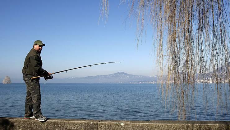 Aus dem Genfersee wurden im vergangenen Jahr 1145 Tonnen Fisch gefangen, der grösste Teil davon ging den Berufsfischern ins Netz. (Archivbild)
