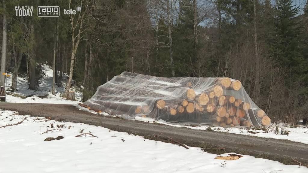 Der Zuger Wald wird frei von Pestiziden