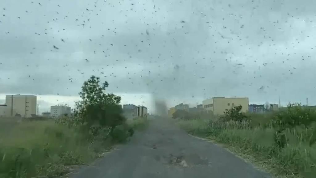 Millionen Mücken schwirren über russischem Dorf