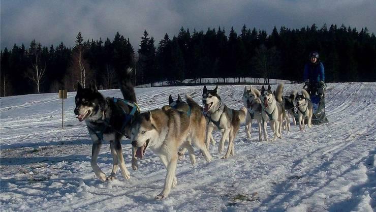 Janine Matsch mit ihrem Achtergespann unterwegs im Schnee. Langstrecken-Schlittenhunde-Rennen faszinieren die 32-Jährige.