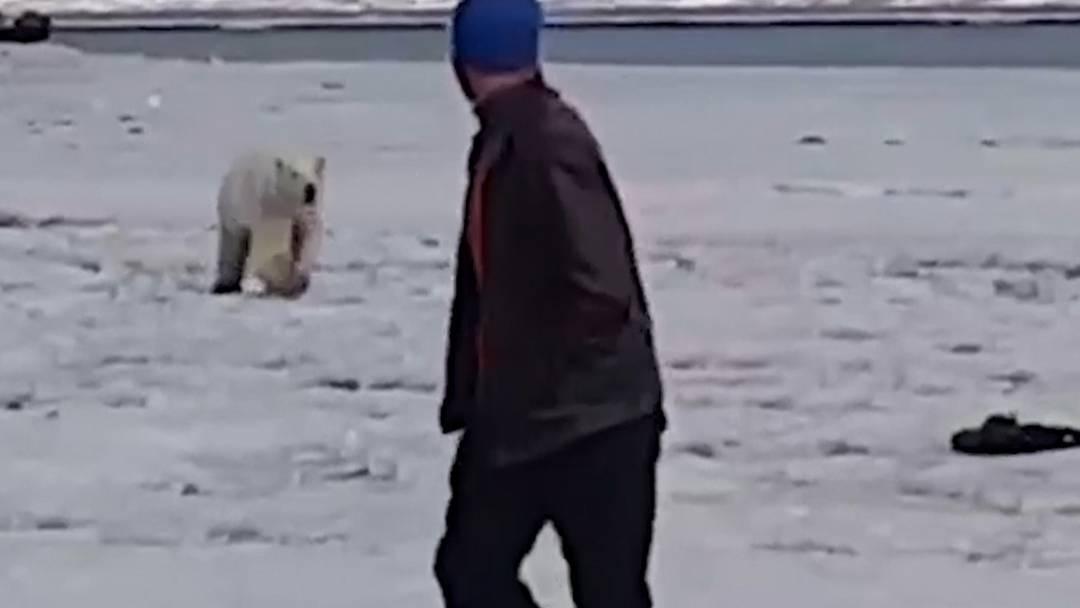 Verirrter Eisbär 700 Kilometer entfernt von seinem Zuhause gefunden