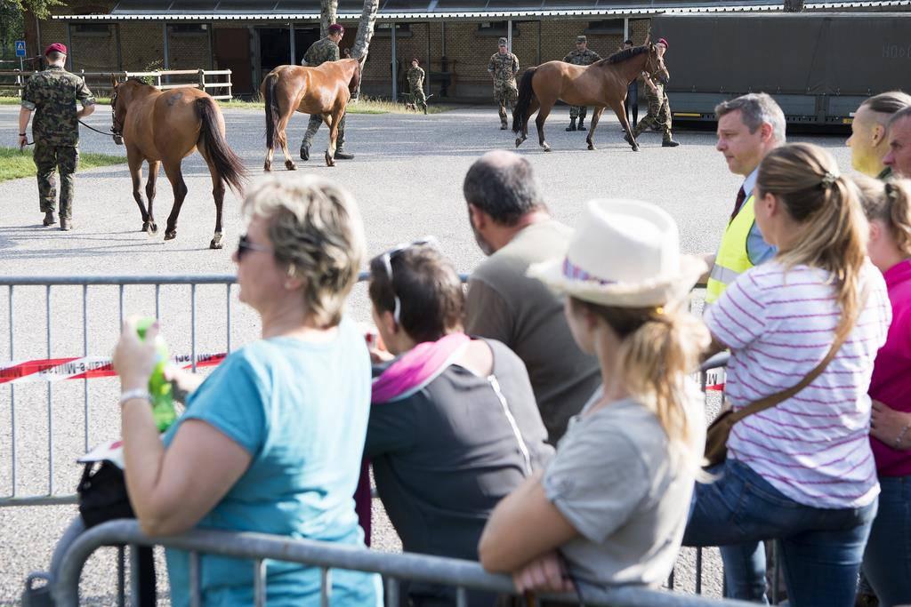 Versteigerung Pferde von Hefenhofen (© Keystone)