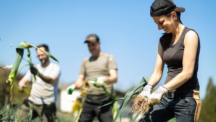 Personal aus der Gastronomie putzt auf dem Hof Schwarz in Villigen AG Lauch. Rechts ist Laura Arcuri zu sehen, Betriebsleiterin des Restaurants Nooba in Laax.