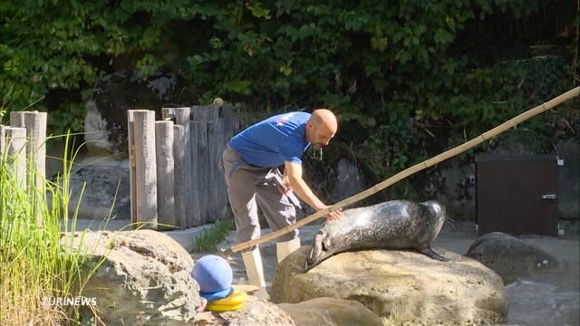 Seehund-Fütterung mit ernstem Hintergrund