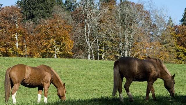 Pferde auf einer Weide im Jura