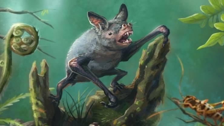 Vulcanops jennyworthyae soll eine Vorfahrin der grabenden Fledermaus Mystacina robusta (im Bild) sein, die im vergangenen Jahrhundert ausgestorben ist.