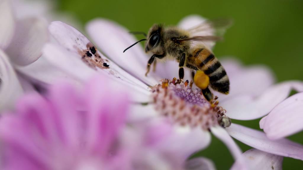 Schutzprojekt für Bienen