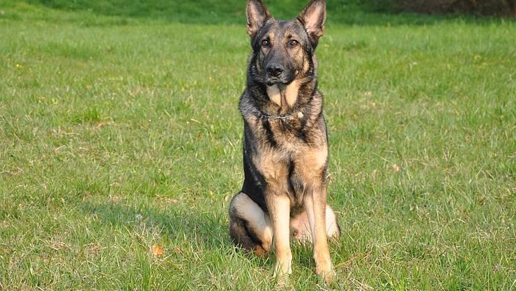 Diensthund Pako war erfolgreich