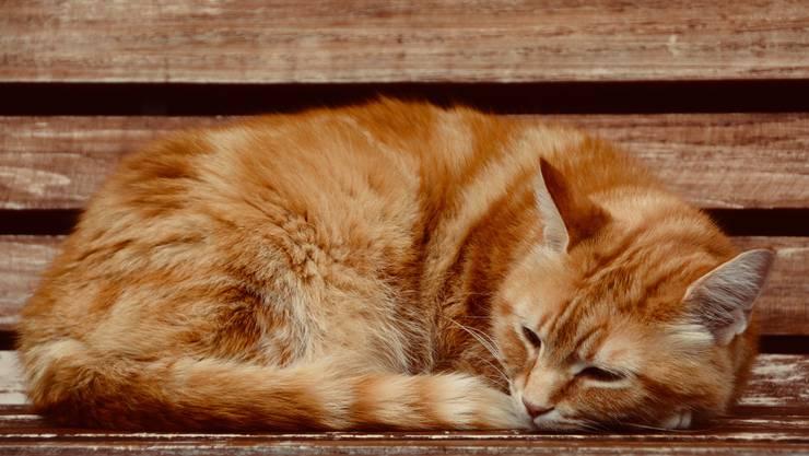 Kätzchen wird an der Sonne aufgewärmt