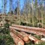Die Winterstürme vom Januar 2018, die Trockenheit im 2018 und 2019 schädigten oder zerstörten viele Aargauer Waldbestände. (Archivbild)
