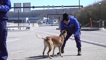 Spürhund «Athos» spielt mit dem obersten Grenzwächter und dem Stv. Chef der Armee.