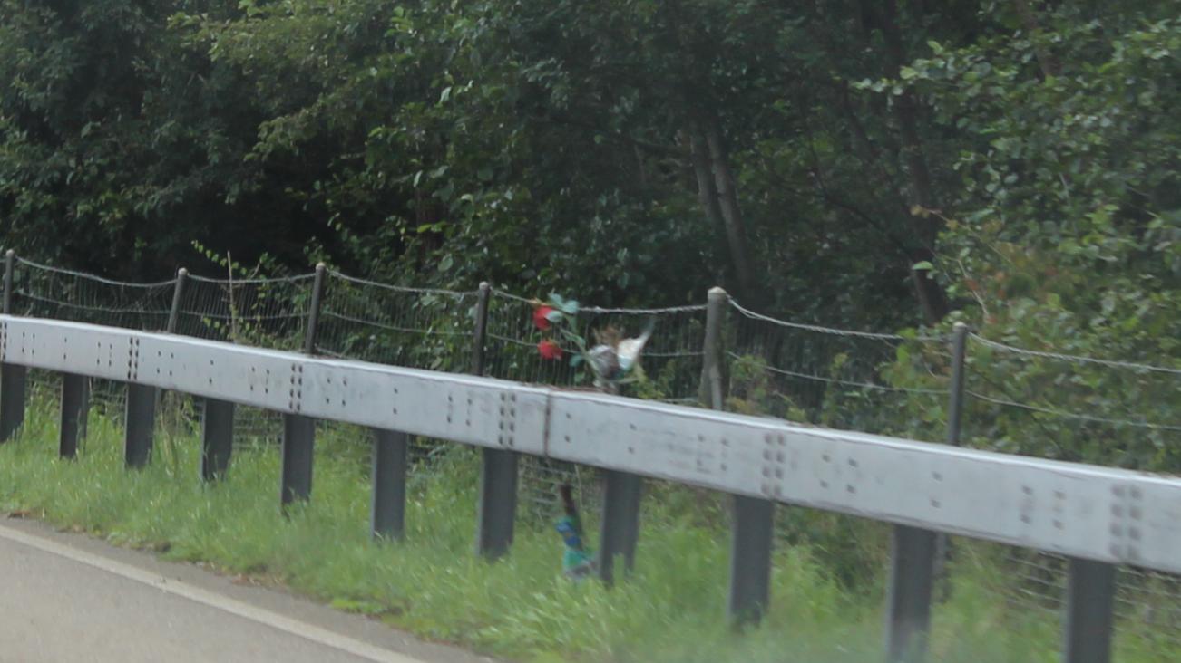 Die Rosen sind bei einer Leitplanke kurz vor Rheineck angebracht worden.