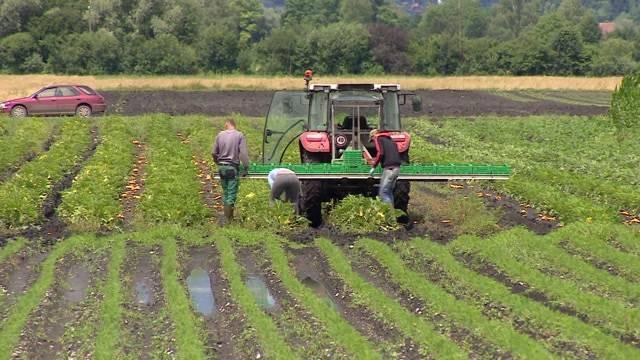 Massive Ernteausfälle wegen Regen
