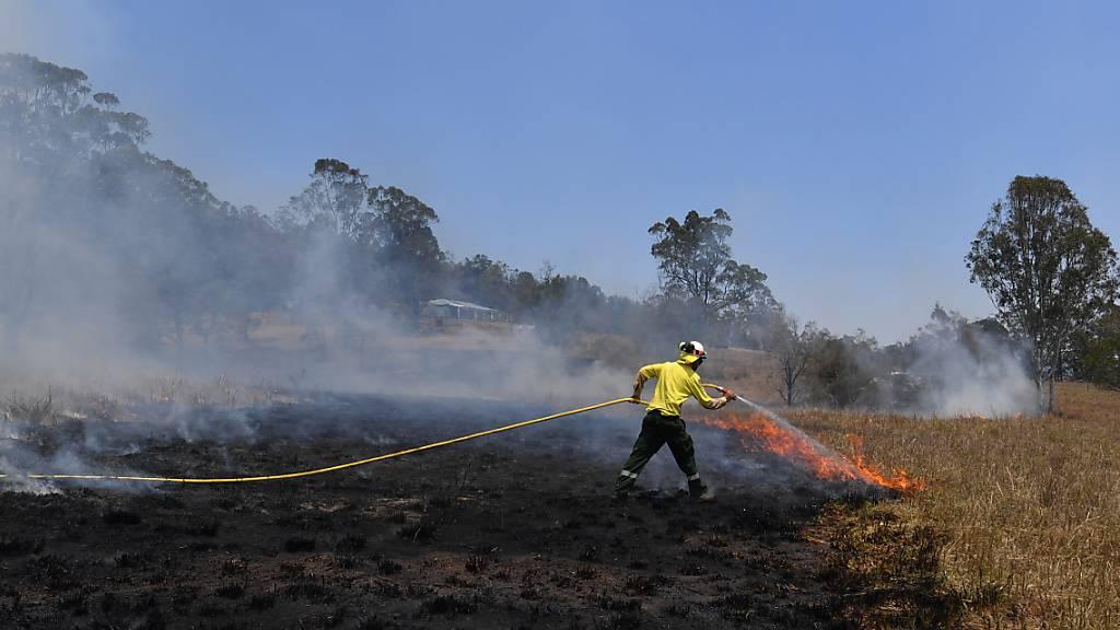 Buschbrände in Australien wüten weiter - Schon vier Tote