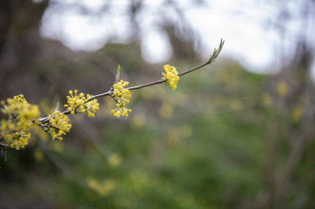 Der Frühling ist Elisabeth Bolliers liebste Jahreszeit. Auch wenn schon zigfach erlebt, freut sie sich jedes Mal aufs Erwachen der Natur.