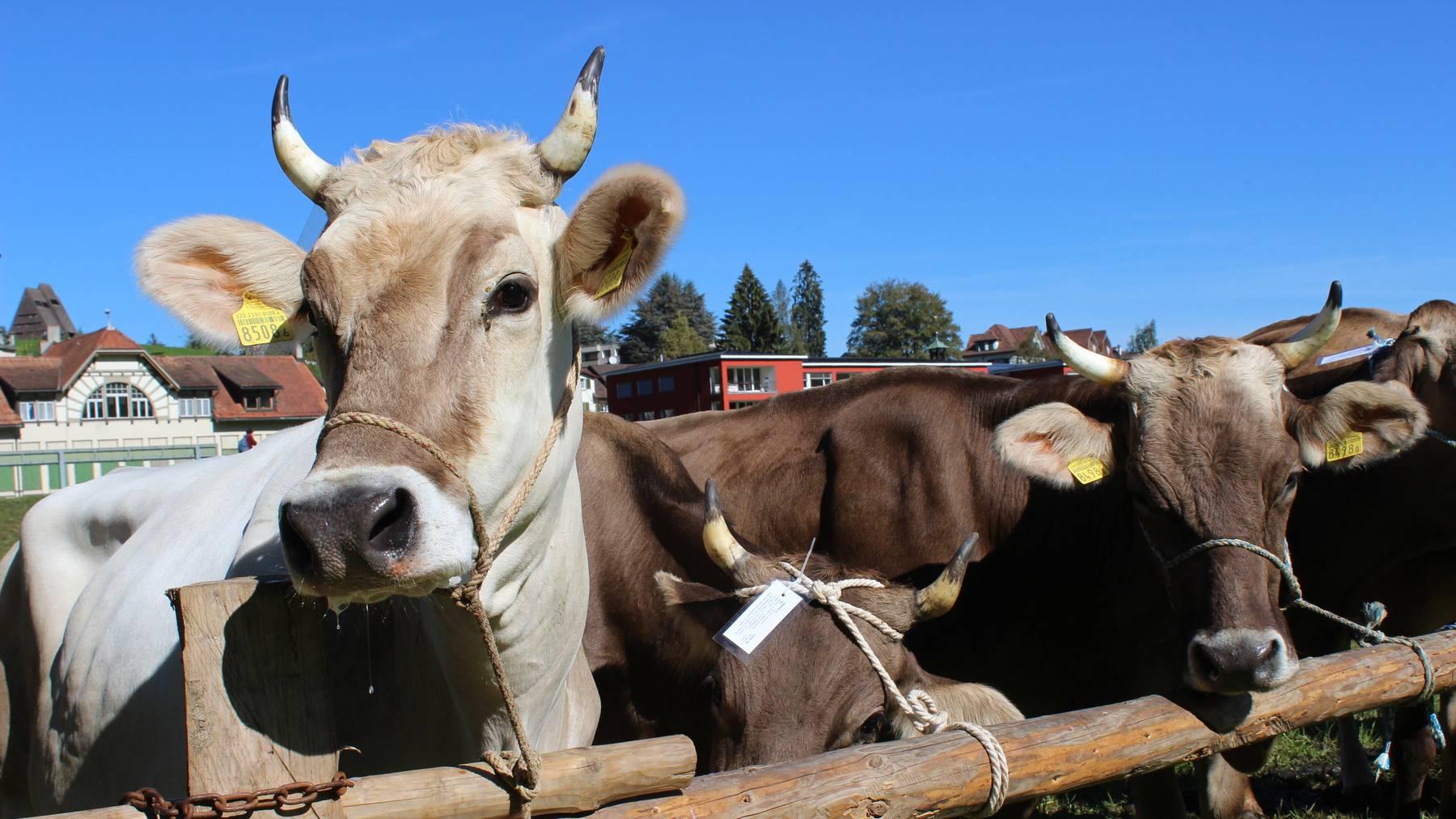 Im FM1-Land haben die Viehschauen begonnen.