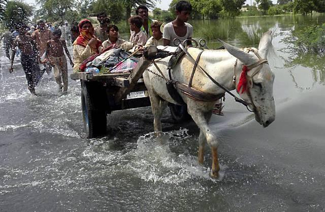 Zur Flucht gezwungen: Dorfbewohner verlassen überschwemmte Gebiete der Punjab-Provinz