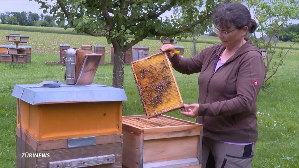 Kältester Frühling seit über 30 Jahren führt zu Honigmangel