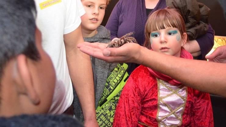 Im Mittelpunkt: Die Grammostola-Vogelspinne begeistert Kinder und Erwachsene.