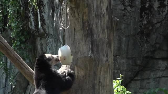 Glacé für die Bären