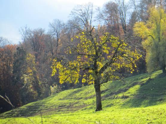 Man sieht, dass langsam die Blätter von den Bäumen verschwunden sind.