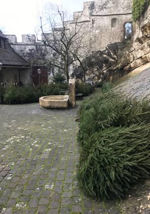 Die Weihnachtsbäume stehen im Schlosshof bereit