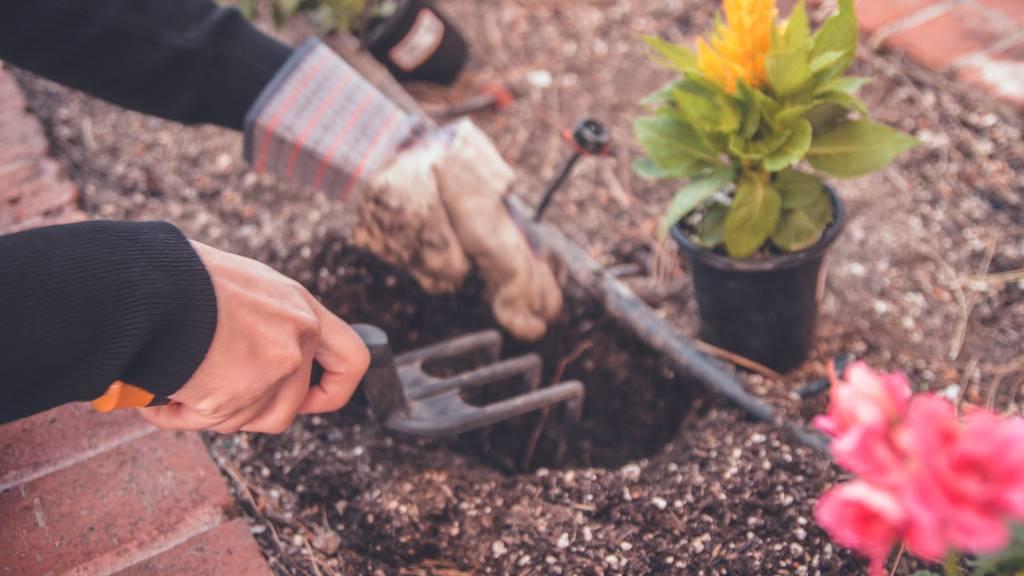 Diese Zürcher Gärtnereien liefern zu dir nach Hause