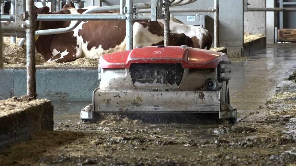 Roboter auf dem Bauernhof: Sie füttern Kühe und misten Ställe aus