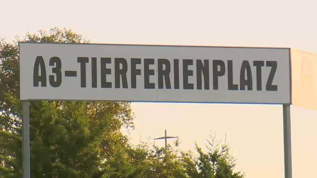 Aus dem A3-Tierferienplatz Scherer in Mülligen/AG