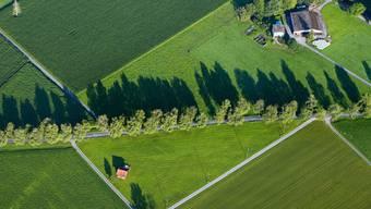 Der Solothurner Bauernverband hilft seinen Mitgliedern in Krisensituationen. (Symbolbild)