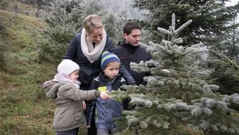 Weihnachtsbaumfällen in Walterswil bei Familie Hürzeler