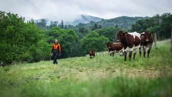 Der neue Juraweid-Pächter Sven Dermon mit seinen Pinzgauer Kühen, die aus Österreich stammen. Das Land gehört der Naturschutzorganisation Pro Natura.