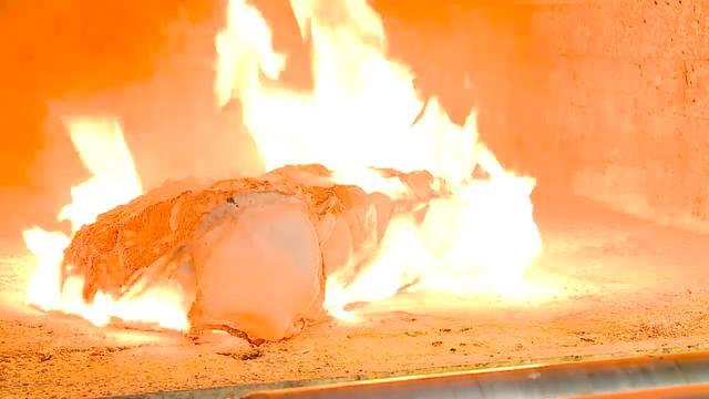 Vom Abschiednehmen zur Urne: Kater Felix wird kremiert.