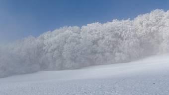 Wintertag am Waldesrand Lägern
