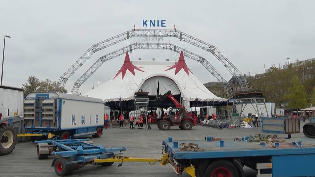 Endlich wieder Shows! Hier baut der Zirkus Knie sein Zelt in Zürich auf