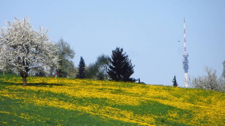 Der Frühling grüsst.