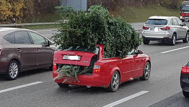 Mindestens vier Tannenbäume befinden sich auf dem Dach dieses Audis.