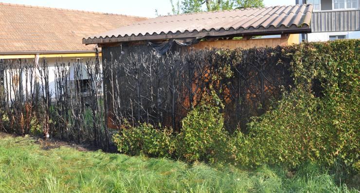 Diese Thuja-Hecke brannte