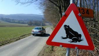 Je nach Intensität und Jahr werden sehr viele Amphibien Opfer des Strassenverkehrs. (Symbolbild)