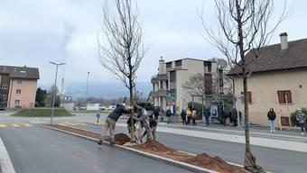 Am Dienstag bestückten Arbeiter vor den Augen wartender Busfahrgäste die Gemeindehausstrasse mit 14 Bäumen.