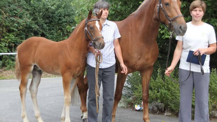 Sieger Hengstfohlen Don Carlo vom Lehenhof von Don Flamingo Züchter  Sandra und Hans Braun.jpg