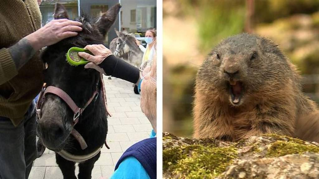 Tierischer Besuch im Altersheim / Frühlingserwachen im Tierpark