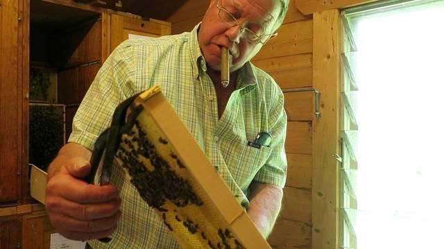 Peter Dällenbach sucht und findet die Bienenkönigin – der Stumpen ist dabei nicht Genuss, sondern Selbstschutz.