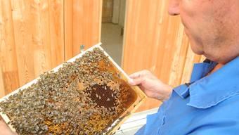 Josef Brägger gibt Amt des Bieneninspektors an Marcel Strub ab