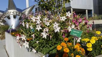 Sanitärlabor und Schulgarten an der GIBS Grenchen werden eingeweiht