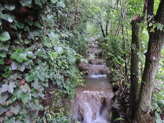 Guggibach - eine kleine Naturoase mitten im Siedlungsraum