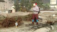 Baum-Verteilaktion
