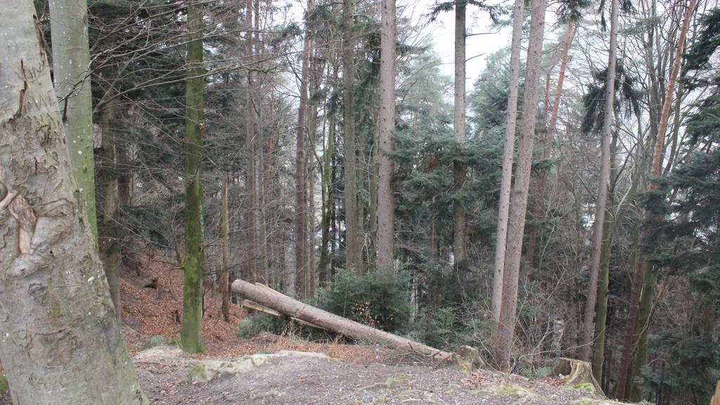 So wird ein kranker Wald aufgepäppelt